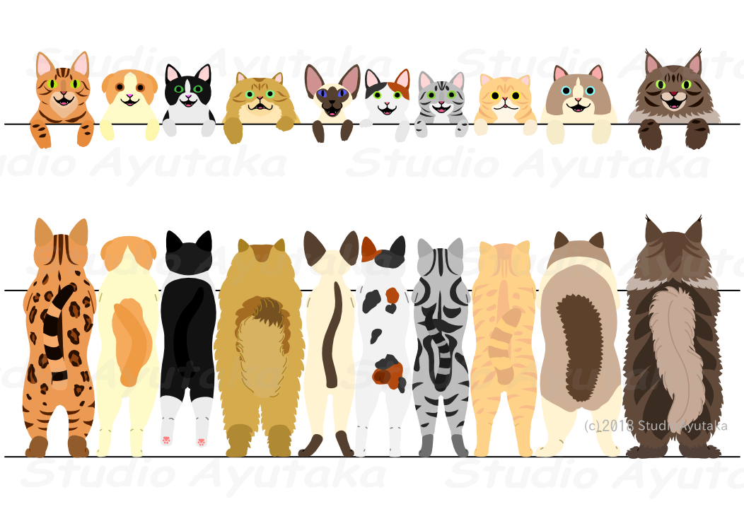standing cats border