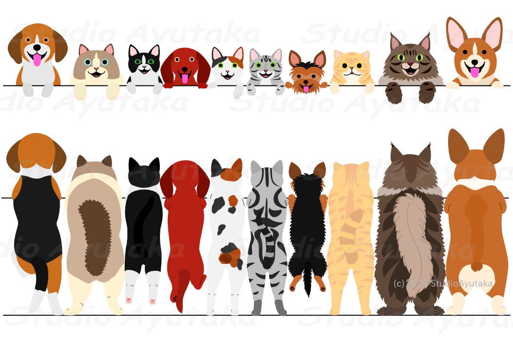 dogs and cats standing border