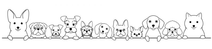 sdogsheadborderline1