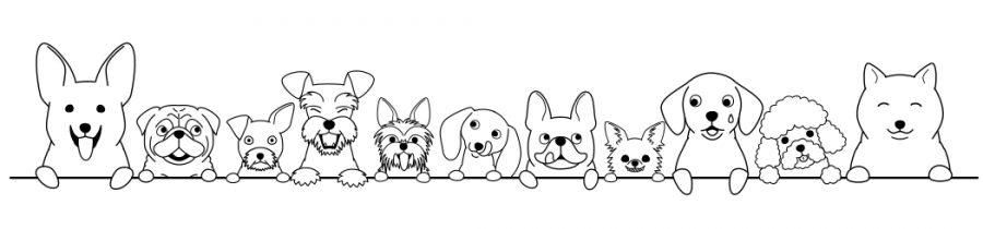 sdogsheadborderline2